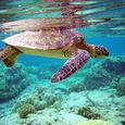Green Turtle Reflections