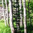 Aspen and Succession