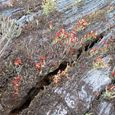 Lichens of the Catskill Mountains
