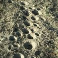 Antlion Craters