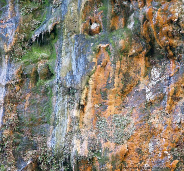 20091110 – Tuesday - Weeping Wall in Saline Canyon