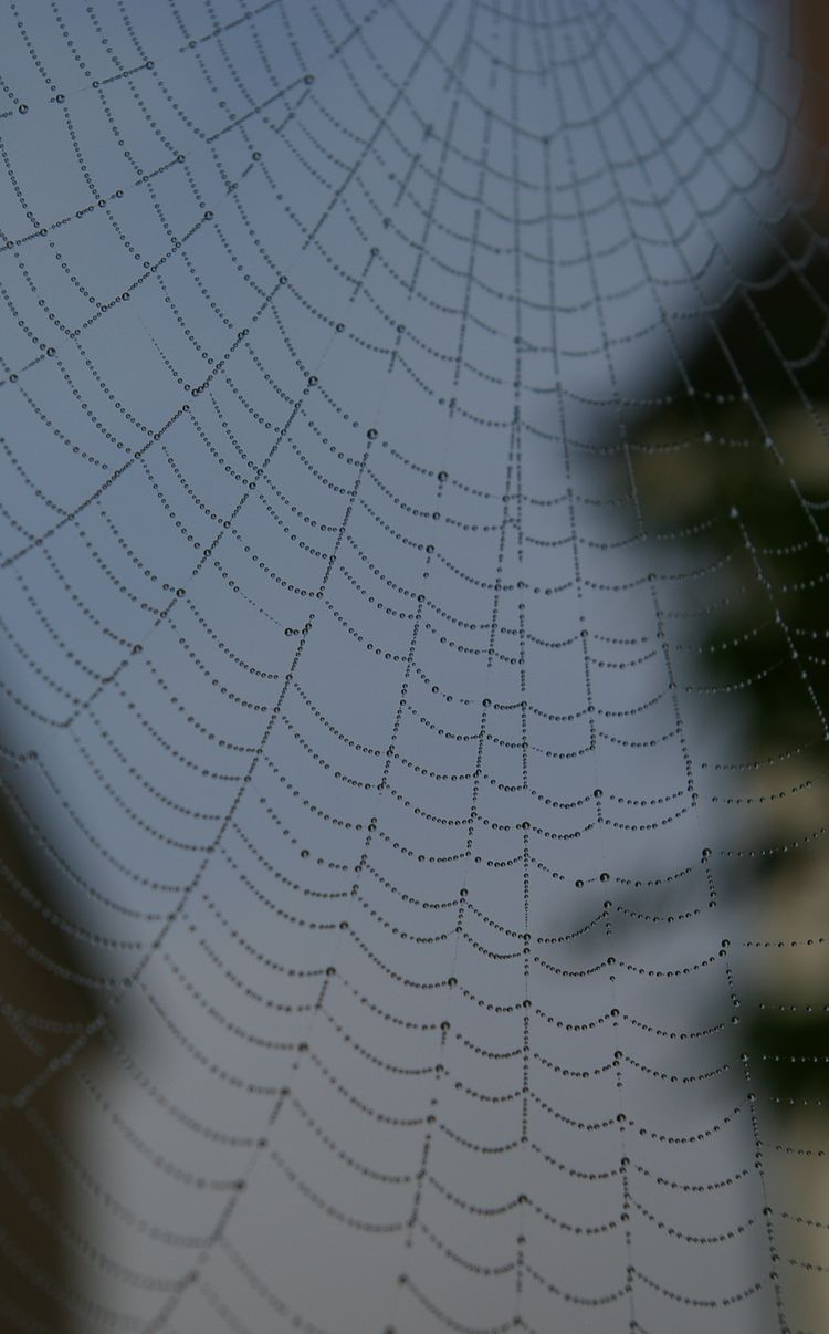 20091128 – Saturday - Spider Web and Water Droplets