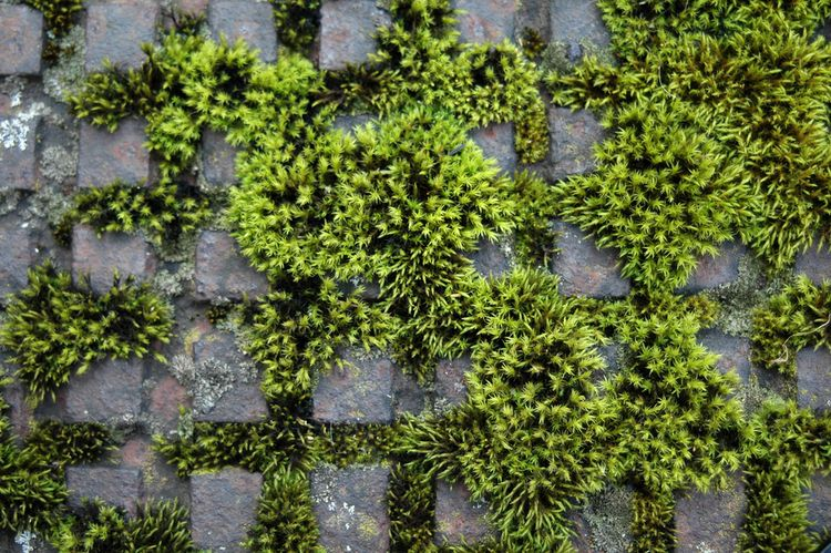 Moss and Succession