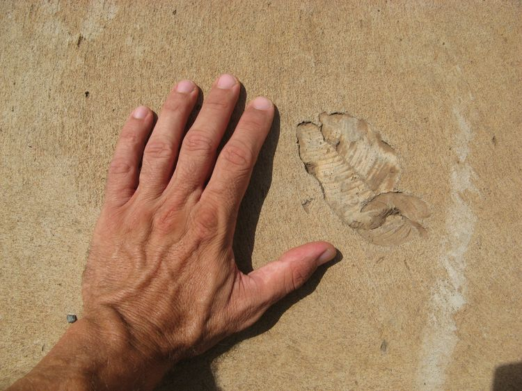 MarioFreitas-Leaf Fossil on Artificial Cement (3)