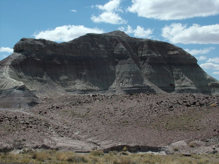 DinorockinPetrifiedForest