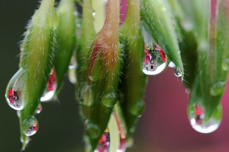 Water Drops and Inverted Images
