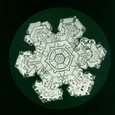 Sector-like Plate Snow Crystal