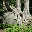 Rocks to Roots
