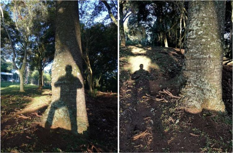 Double tree shadows
