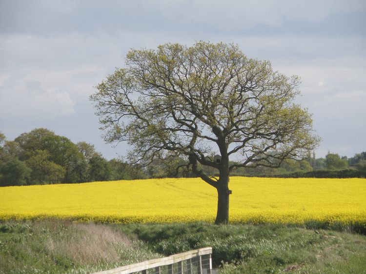 Green_yellow_uk