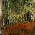 Autumn Colors in Utah's Wasatch Range