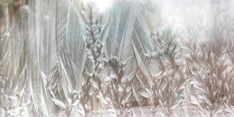 Frosty feathers and flowers