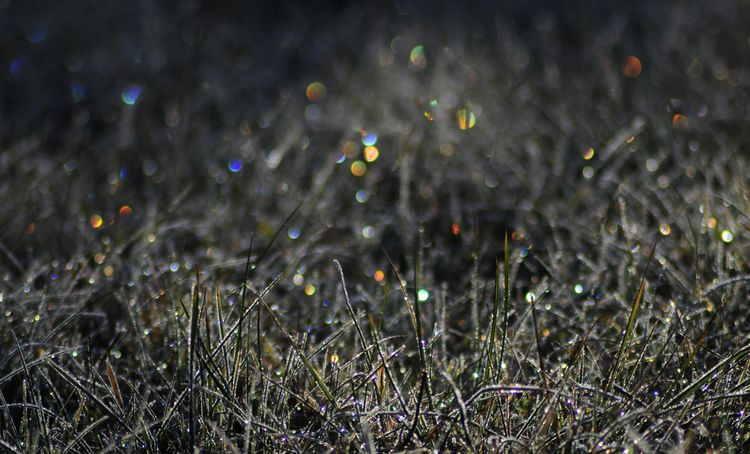 Refracting icecristals in grass-FotoJanKoeman-2012-10-15-s (4)