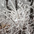 Paper-like Frost on Tree Branches