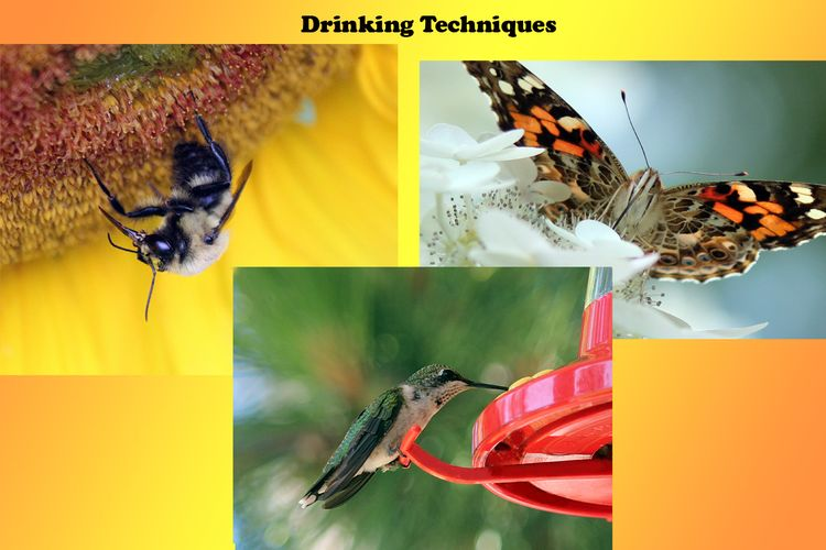 Drinking Techniques (2)