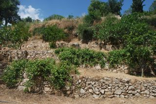Ancient dry farming on terraces