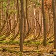 Bent Trees at Sleeping Bear Dunes National Lakeshore