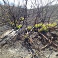 Forest Regrowth After a Fire