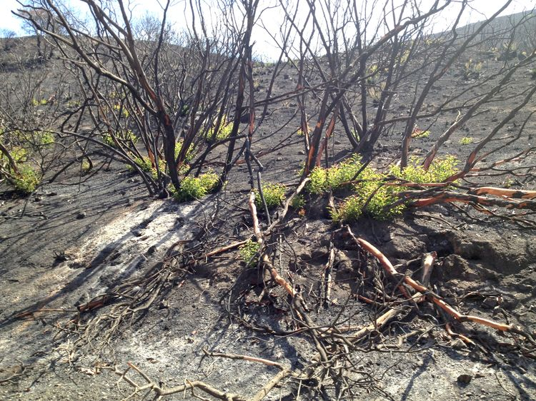 Forest Regrowth After a Fire - EPOD - a service of USRA