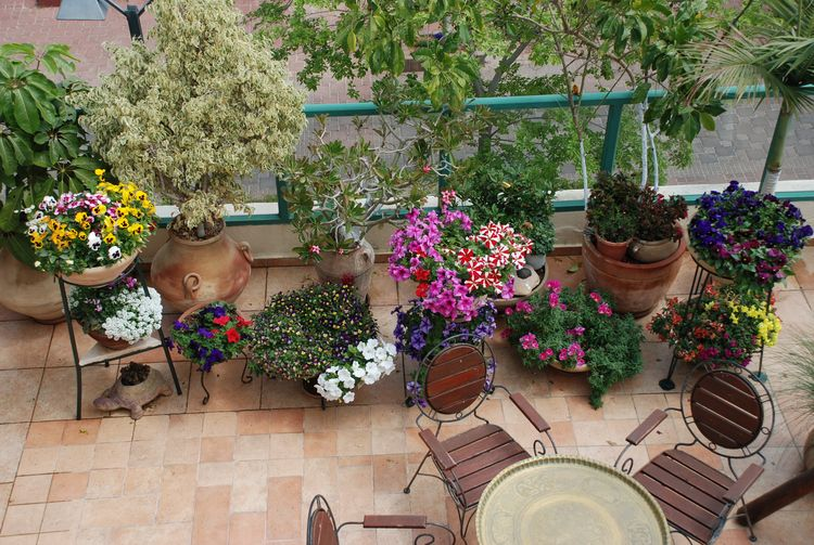 Home gardening - ornamentals in balcony