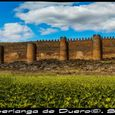 Castle and Sunflowers Panorama