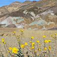 New Life in Death Valley