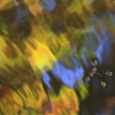 Water Strider and Autumn Colors