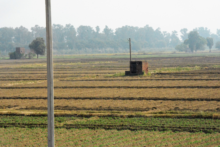 Punjab Intensive Field crops agriculture (furrow irrigation) (2)