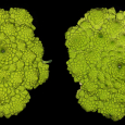 Romanesco Broccoli and Fractals