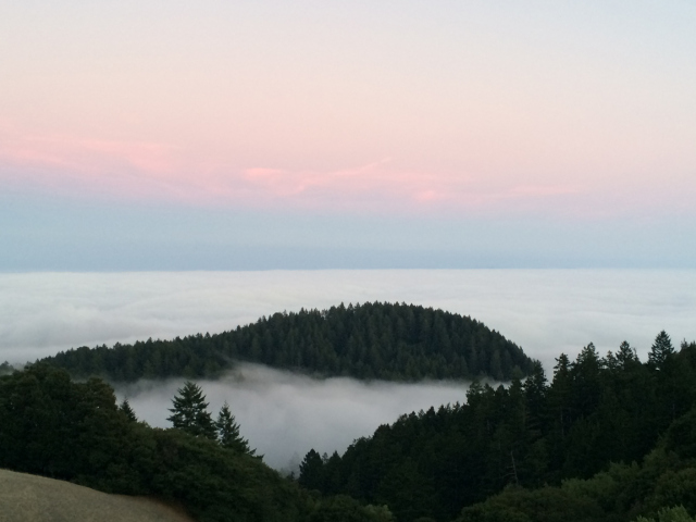View-from-mt-tam-8-2-2014-m