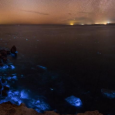 Bioluminescence in the Gulf of Oman