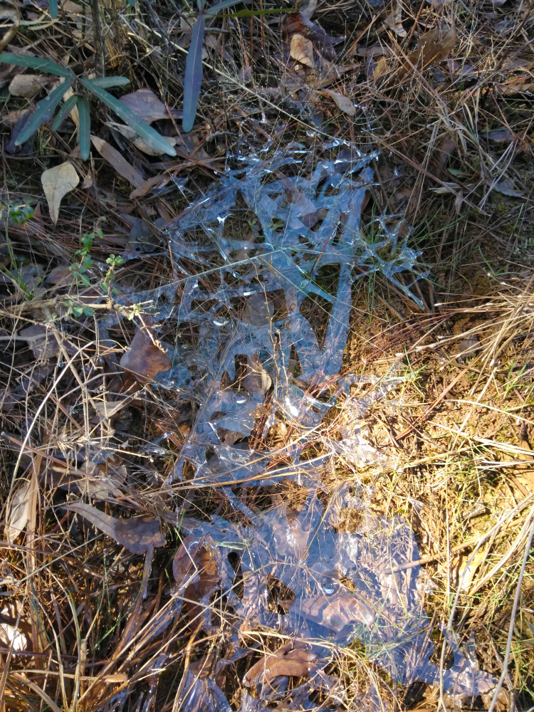 Frost_Lace_IMG_20180131_122140 (1)