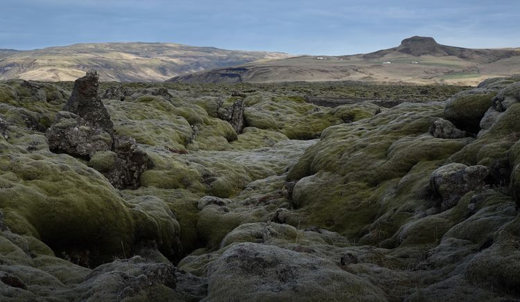 Kupersmith moss covered lava flow