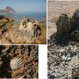 Shapes of Monte Cofano Seashore