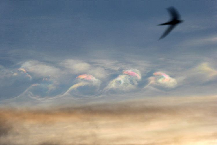 Iridescent Kelvin-Helmholtz clouds with passing Swallow, Mutare, Zimbabwe