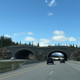 Wildlife Crossings