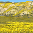 Carrizo Plain National Monument in Bloom