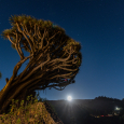 Dragon Trees of La Palma Island and Full Moon of March 19, 2019