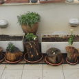Nature Nurturing Nature: Stump Flowerpots